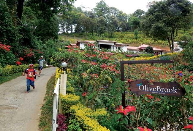 family-munnar-olivebrook