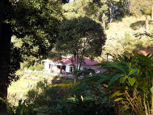 munnar-resort-olivebrook