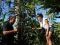 cardamom-seed-munnar-olivebrook