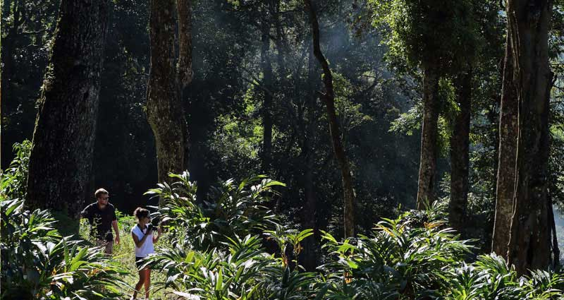 relaxation-packages-olivebrook-munnar